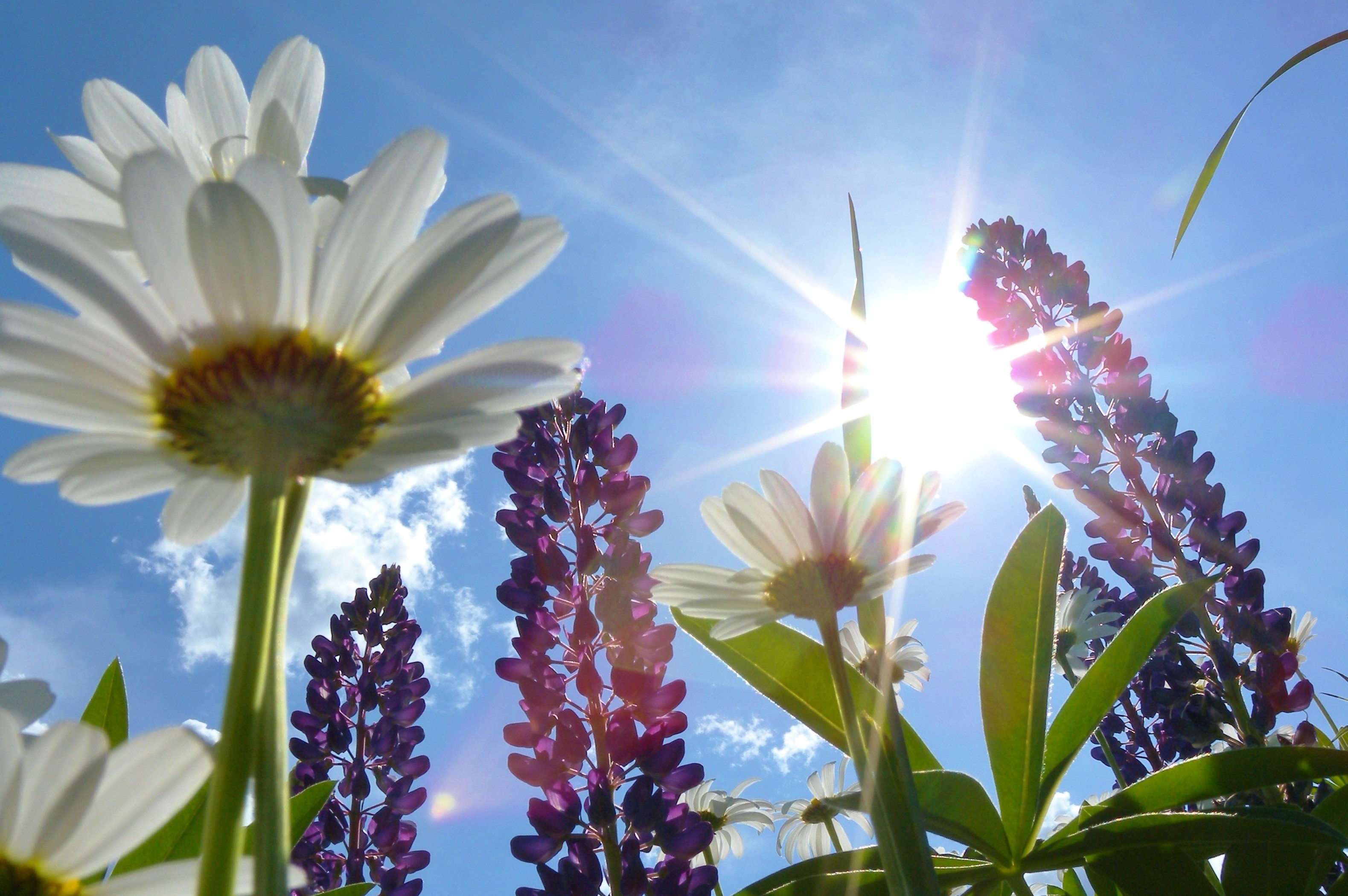 Image: Sun through flowers
