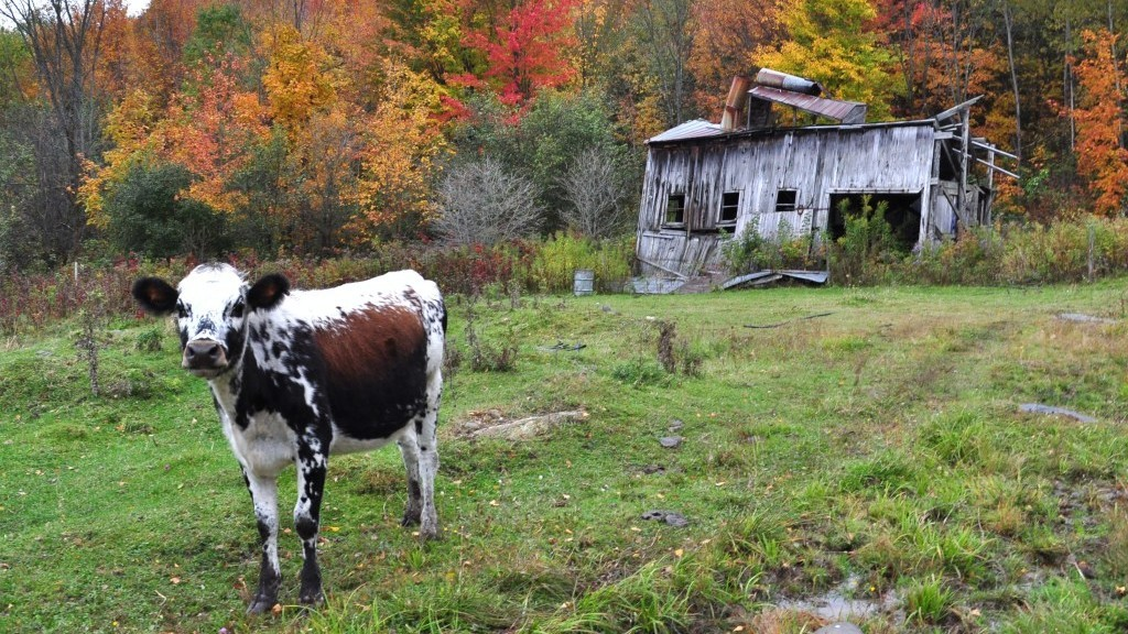 cow power