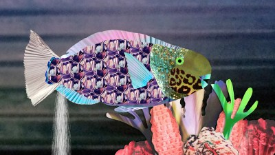 Gross science collage parrot fish