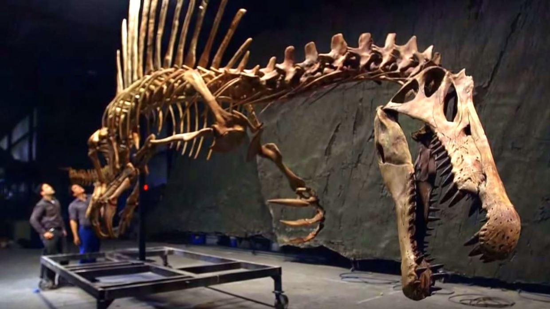 Image: Spinosaurus skeleton bigger than T. Rex