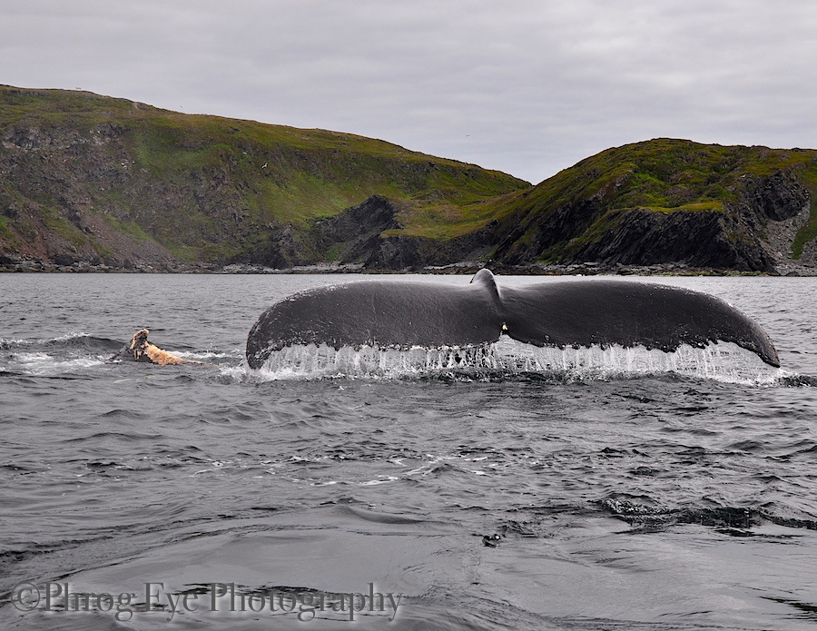 Image: Mother and baby whale survived attached by killer whales