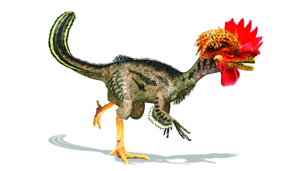 Turning Birds into Dinosaurs, the dino-chicken