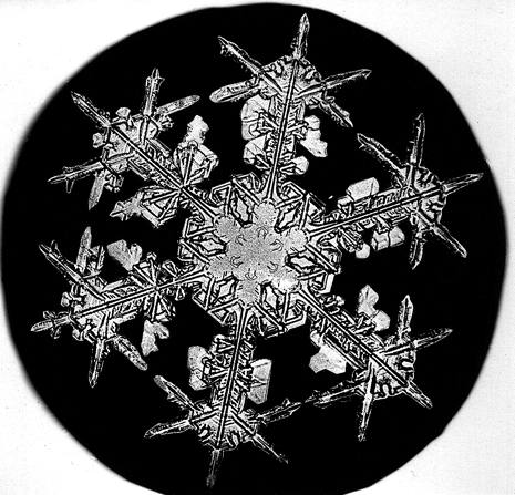 Image: Snowflake Bentley Snowflake 2