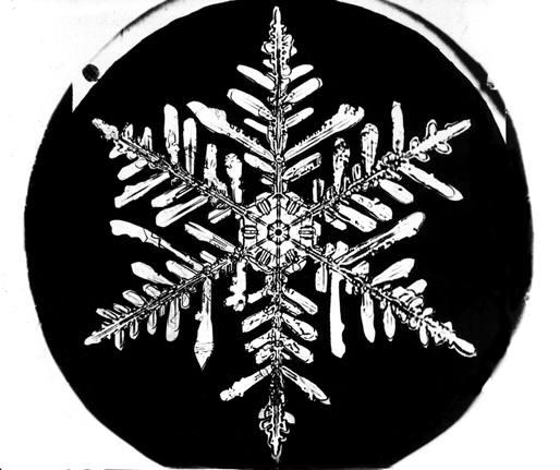 Snowflake Bentley Snowflake 4