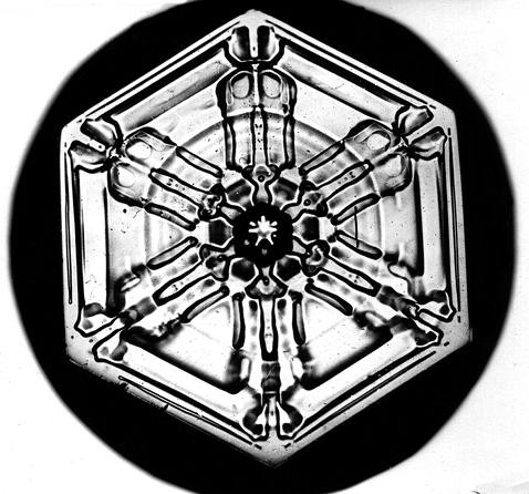 Image: Snowflake Bentley Snowflake 7