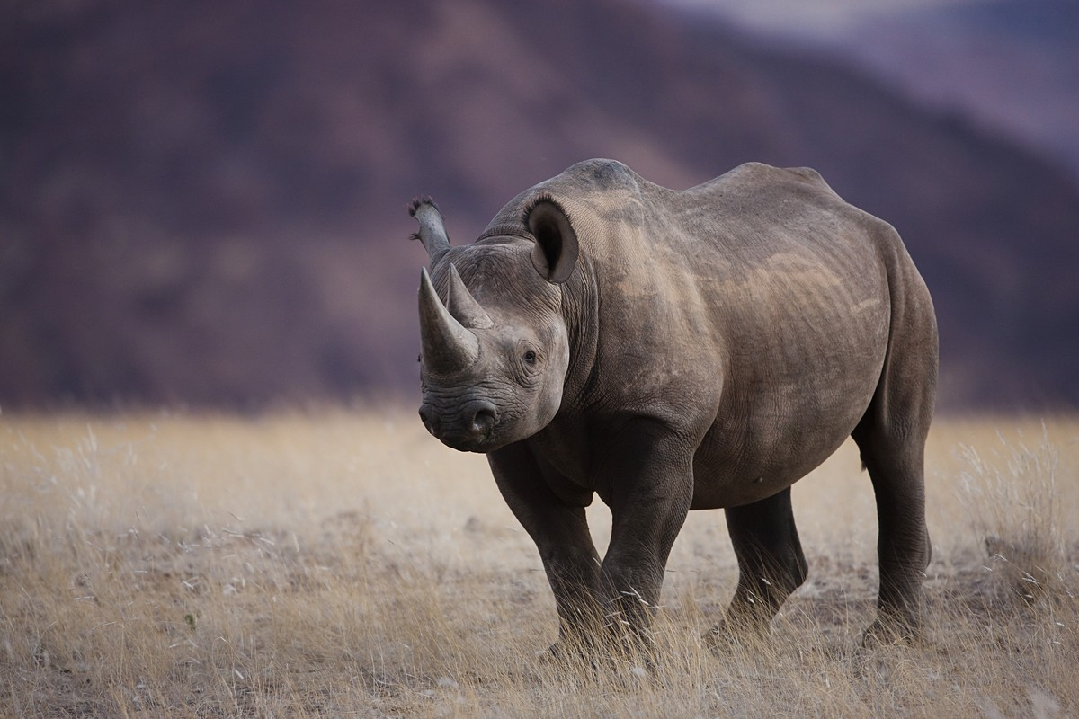 How to Survive a Rhino Charge | Ever Widening Circles — EWC