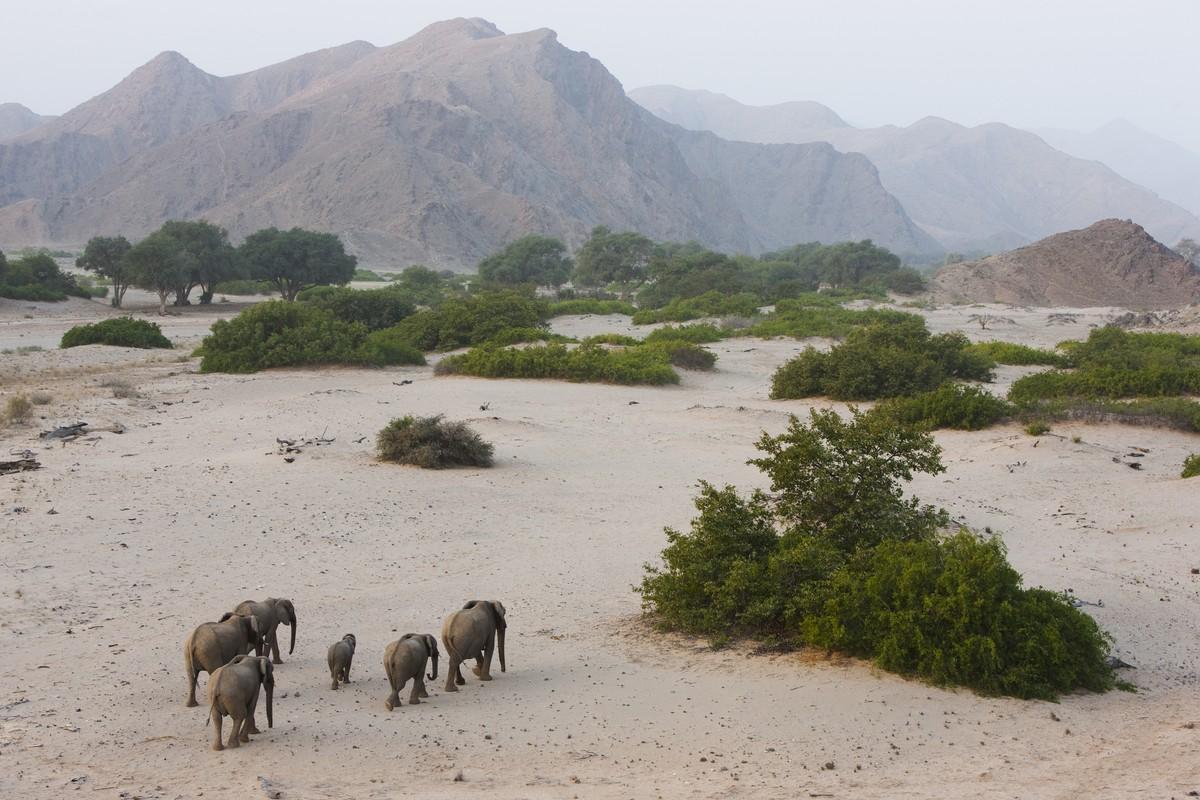 Image: Theo Allofs elephants in Namibia's white sand