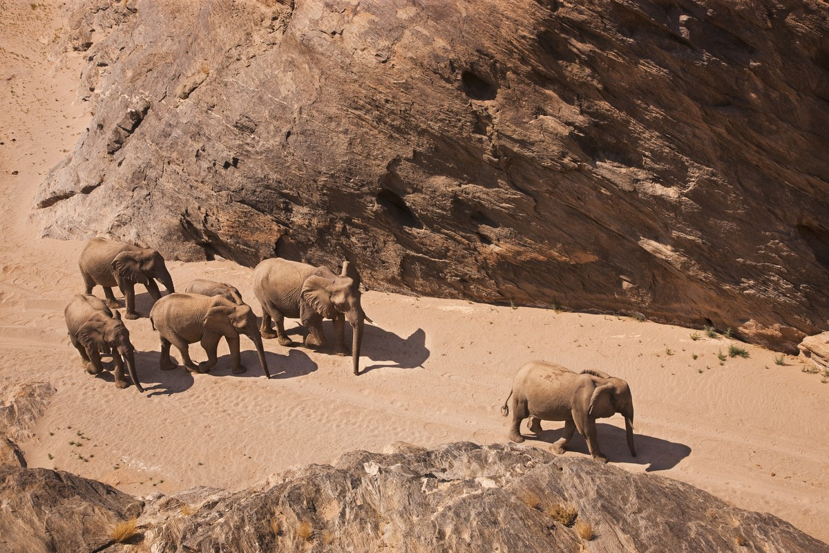 Image: Theo Allofs elephant heard in the Namibia gorge