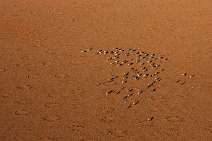 Image: a herd in the orange sands