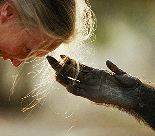 Jane Goodall's Story