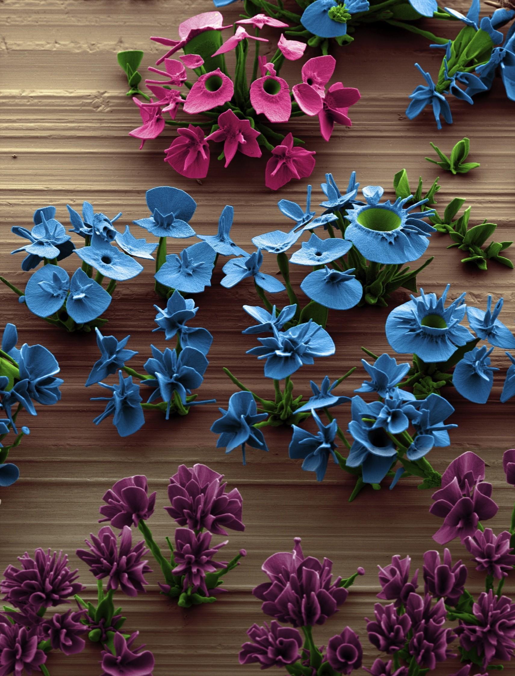 A garden of microscopic crystal flowers
