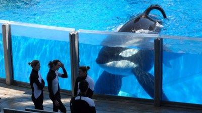 Image: Trainers and an orca, both seem perplexed