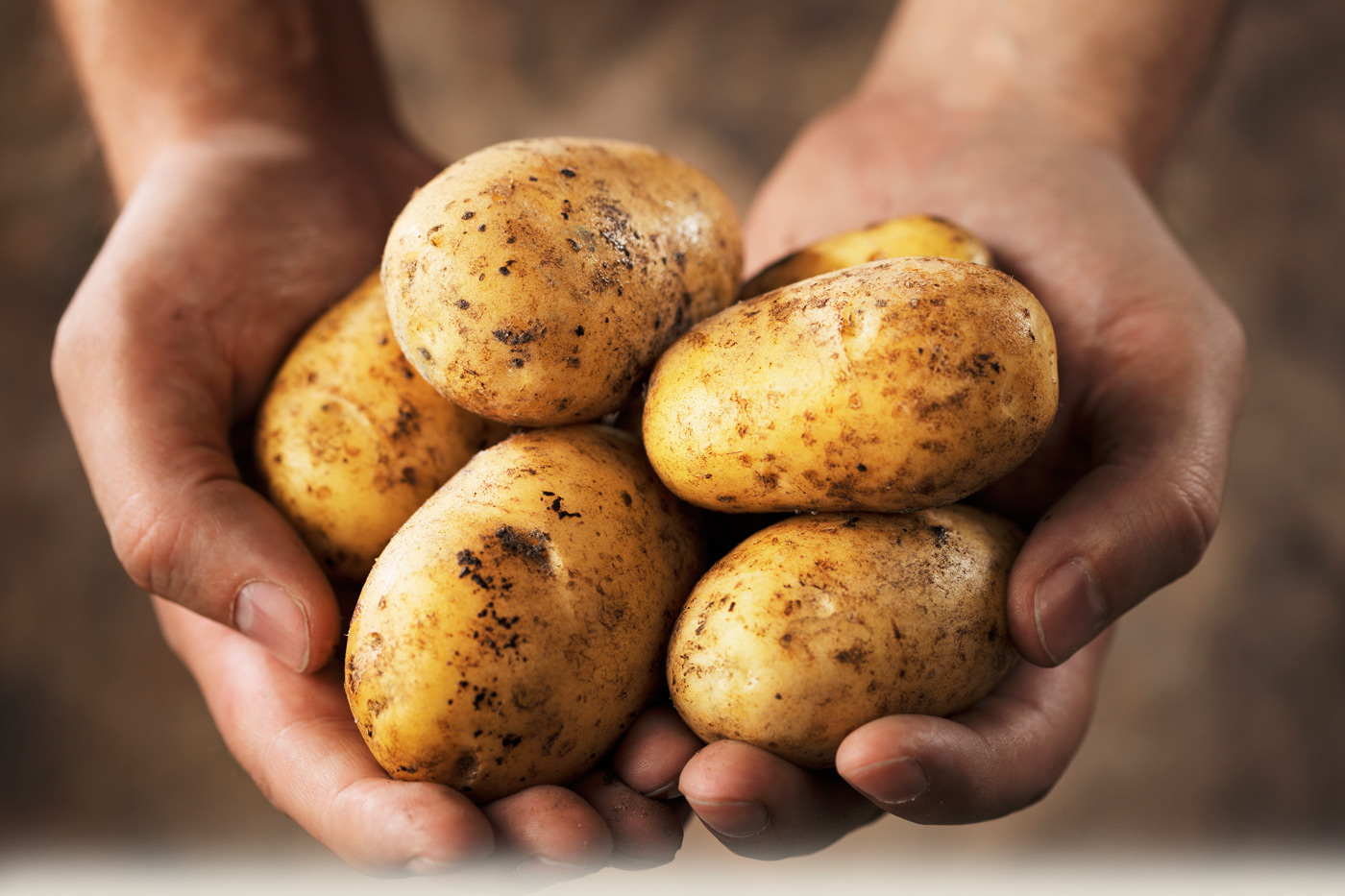 Image: Hands holding a pile of potatoes. Image for spud facts