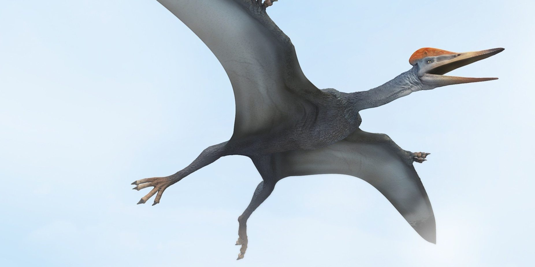 Image: The Pterodactyl, a dinosaur that was one of the first reptiles to take to the skies