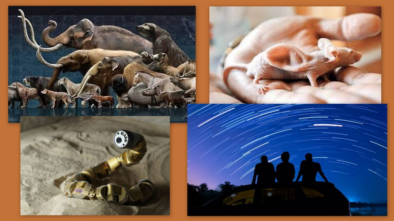 Image: Collage of star gazing,, megafauna animals, and snake robot
