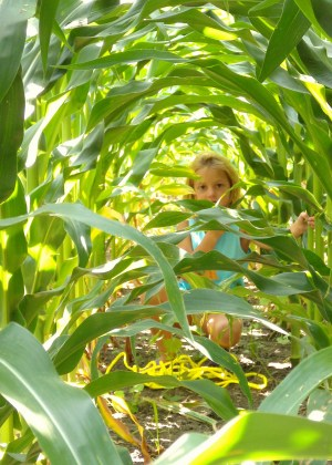 Image: Little girl peering through the corn
