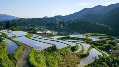 Image: Waving edges of Japanese rice paddy landscape