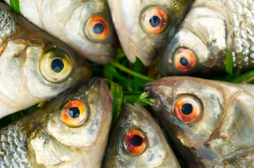 Image: Fish on green grass