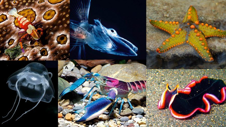 Image: Six different ocean species. Ho studying new species can lead to breakthroughs