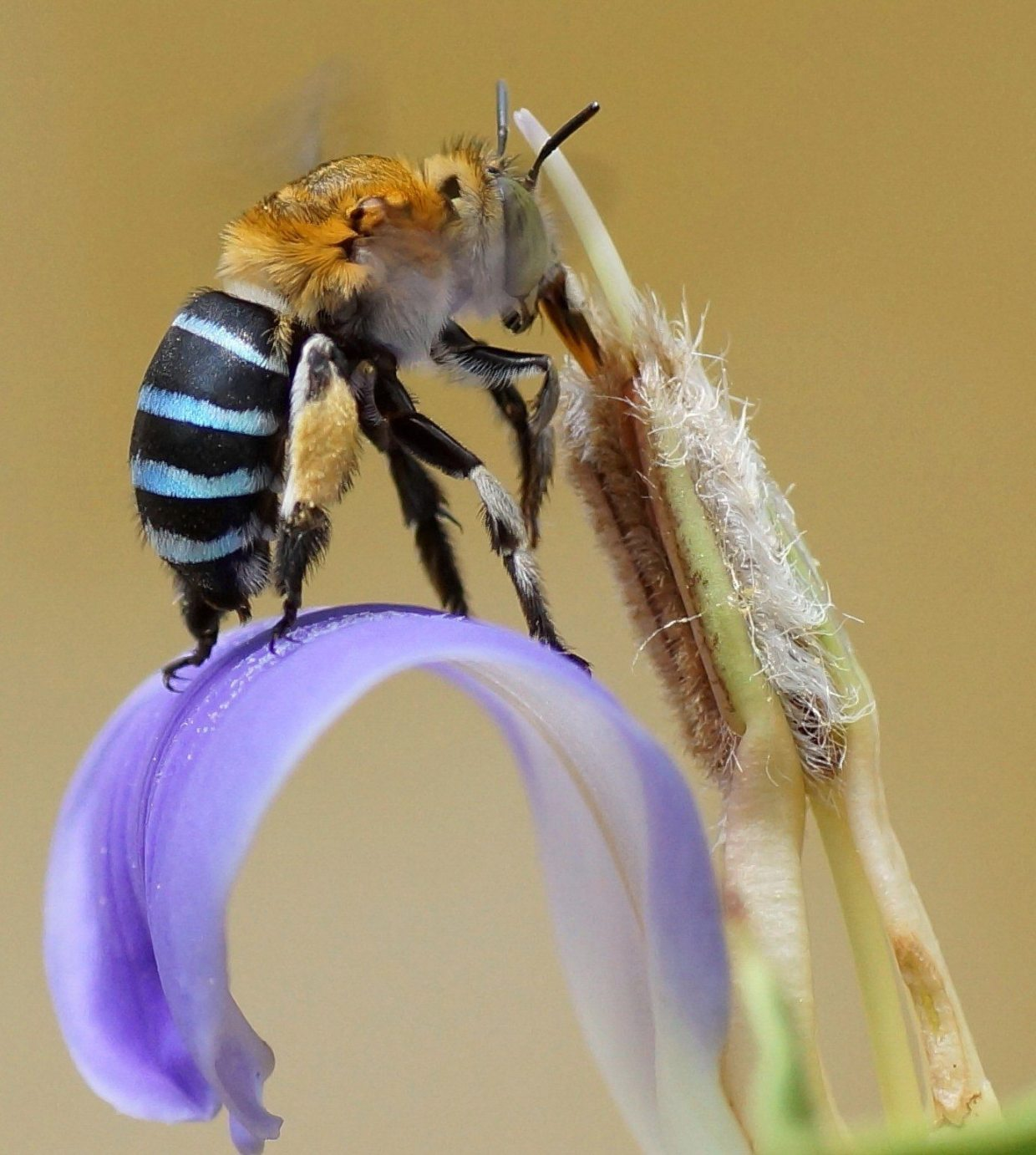 Image: Insect on an iris