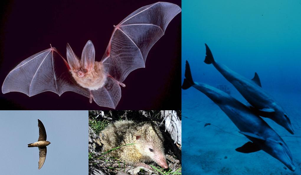 Image: a collage of animal pictures including a bat, dolphin, hawk and tanrek