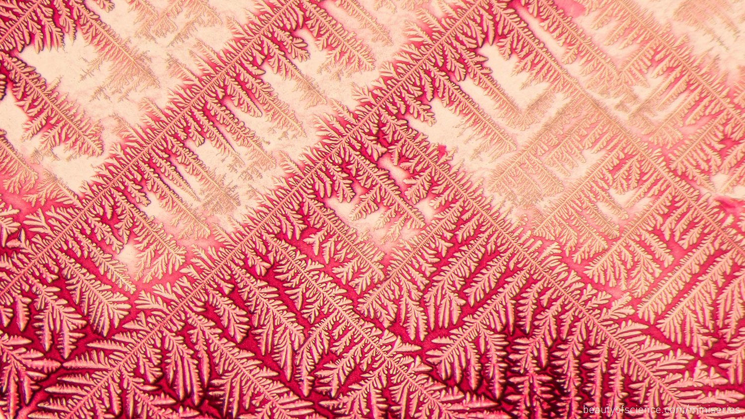 Image: Ammonium Chloride crystalization in a red pigment underneath a microscope!