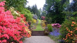 Image: Path cutting through flower garden