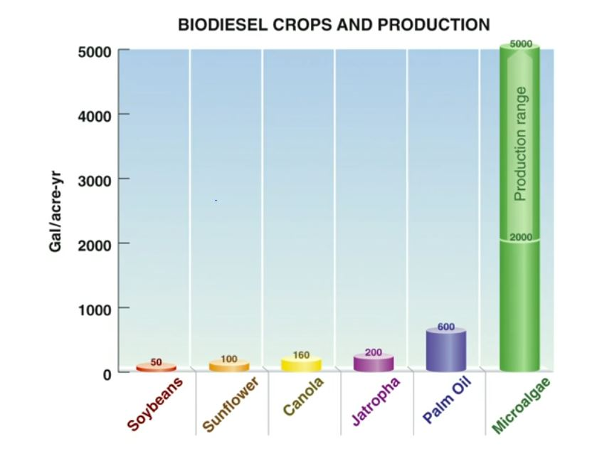 Image: Graph showing the production of biofuel from algae is 10 time more than nearest other source