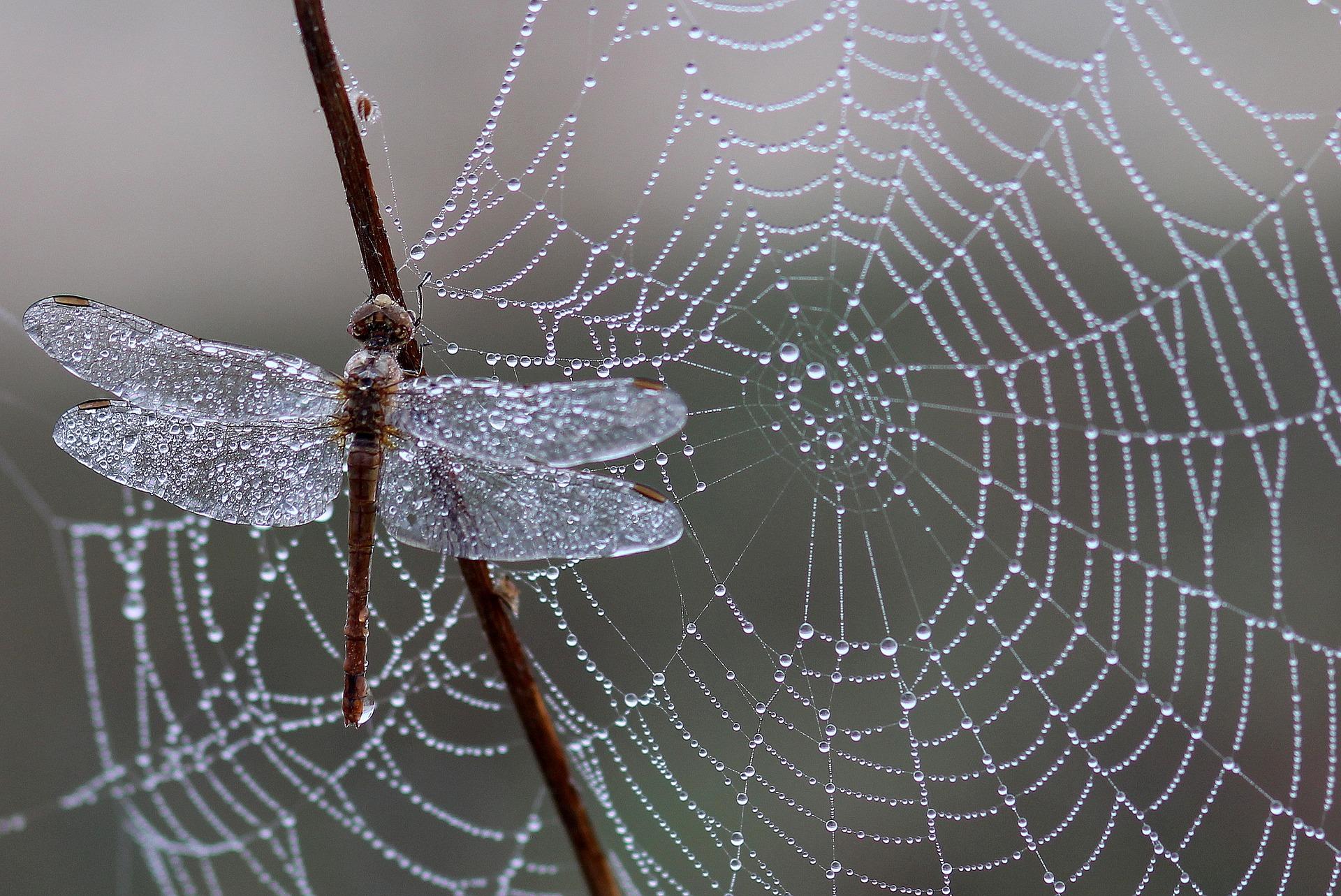 A woven masterpiece; spider silk.