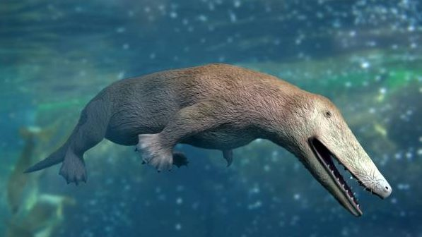 Image: Illustration of Ambulocetus natans, a fur covered creature the size of a sea lion that was an ancestor of the modern whale