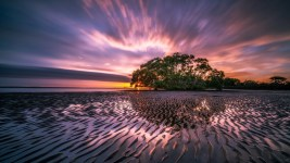 Image: A lone tree on an island with the sun setting on low tide around it.