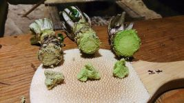 Image: Three types of wasabi ground up