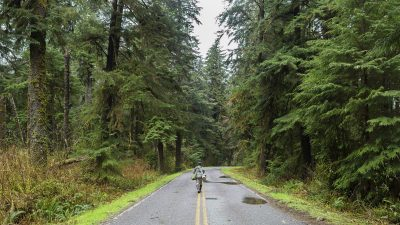 Image: Man walking with back faced to us, down a paved road between thick rows of trees growing along the sides