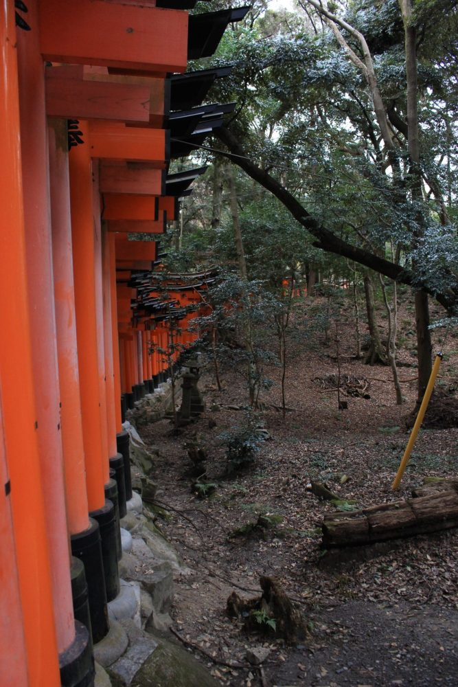 fushimi inari shrine gates 667x1000 - A visit to Ryoanji Temple, Kinkaku Temple, & Fushimi Inari Shrine in Kyoto, Japan