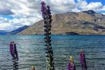 lake wakatipu queenstown nz - Travel Contests: April 11, 2018 - New Zealand, China, Hawaii, & more
