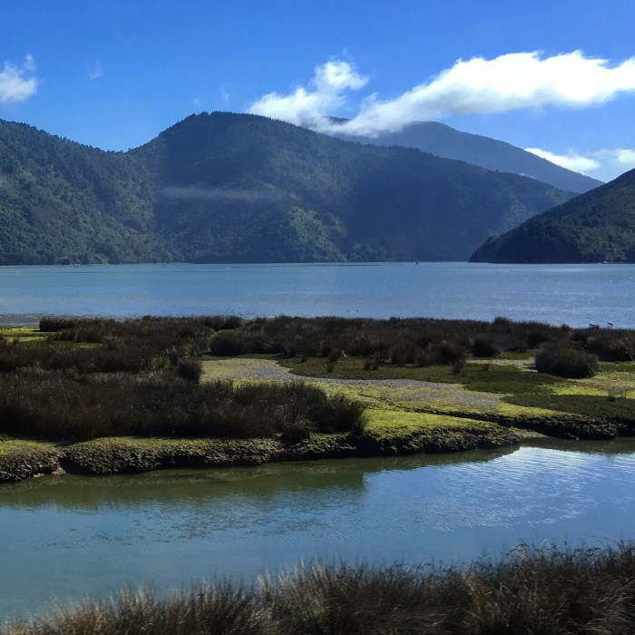 havelock pelorus river mahau sound 700x700 - Nelson to Wellington, New Zealand by bus and ferry via Picton