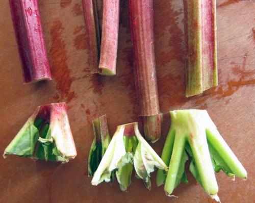 rhubarb cranberry squares