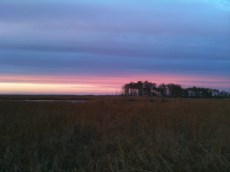 Blackwater NWR sunset