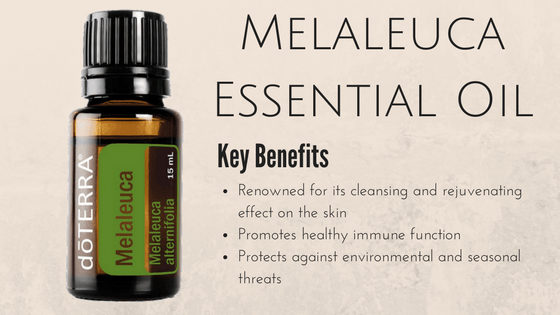 Melaleuca Essential Oil Review