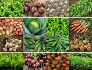 7 STEPS TO GROWING ORGANIC VEGETABLES