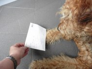 Keep this still, will you, mum. I want to read it!
