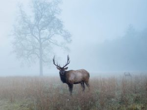 where to see wildlife in the smoky mountains