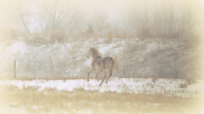 still still still...pony in the snow in Farmington