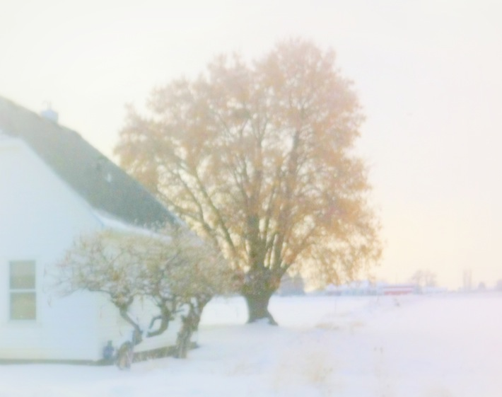winter farmhouse and tree, winter requiem
