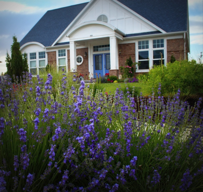 The Lakehouse in Lavender