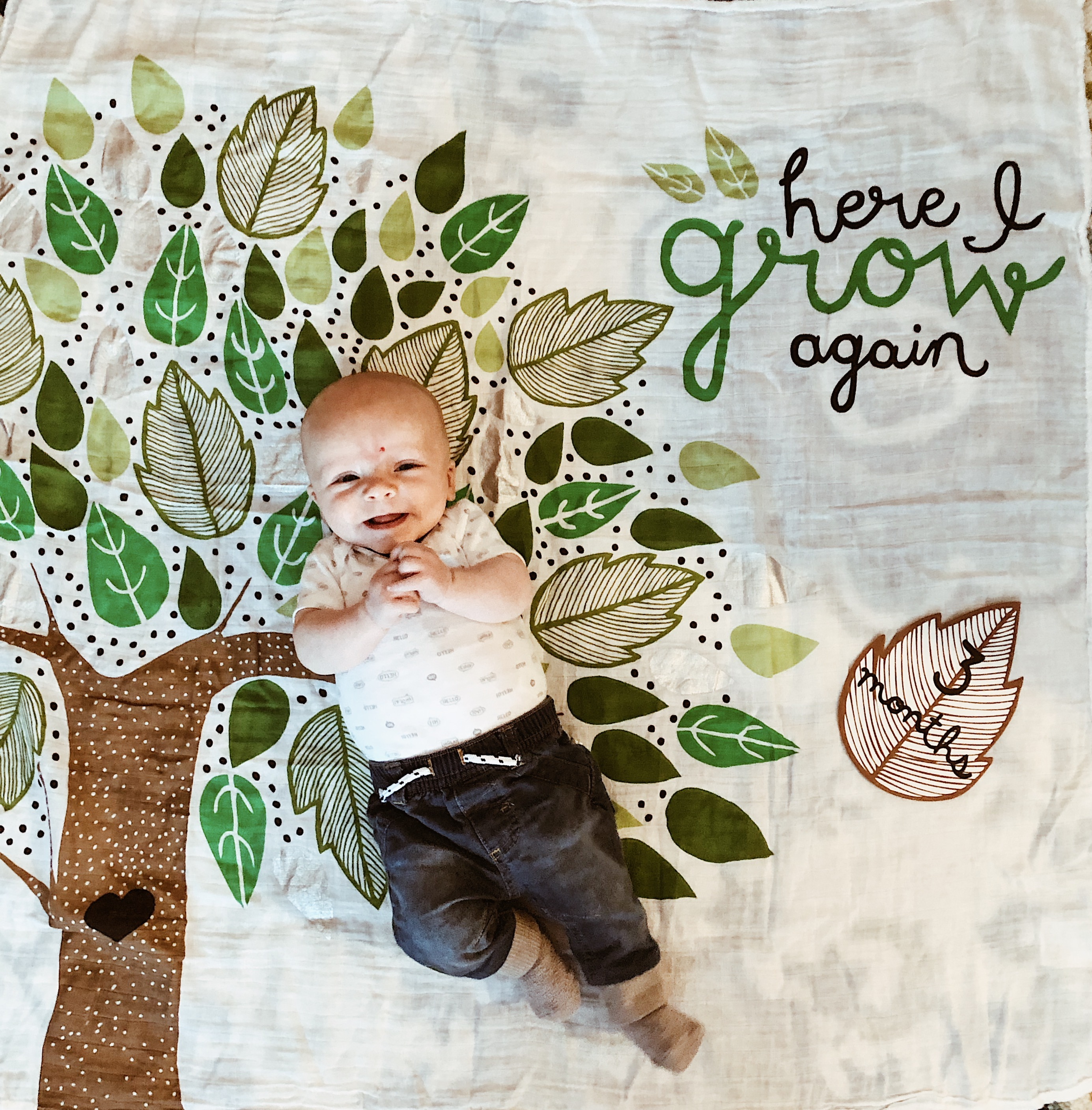 3 Month Update: Addison James with Arm's Reach   Everyday Mama