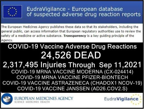 """Pfizer-BioNTech Vaccine Found to Be """"Alive with Micro-organisms"""" or Moving Particles by Swedish Physician-Researcher Dr. Erik Enby 11092021-adrre-eu-injuries"""