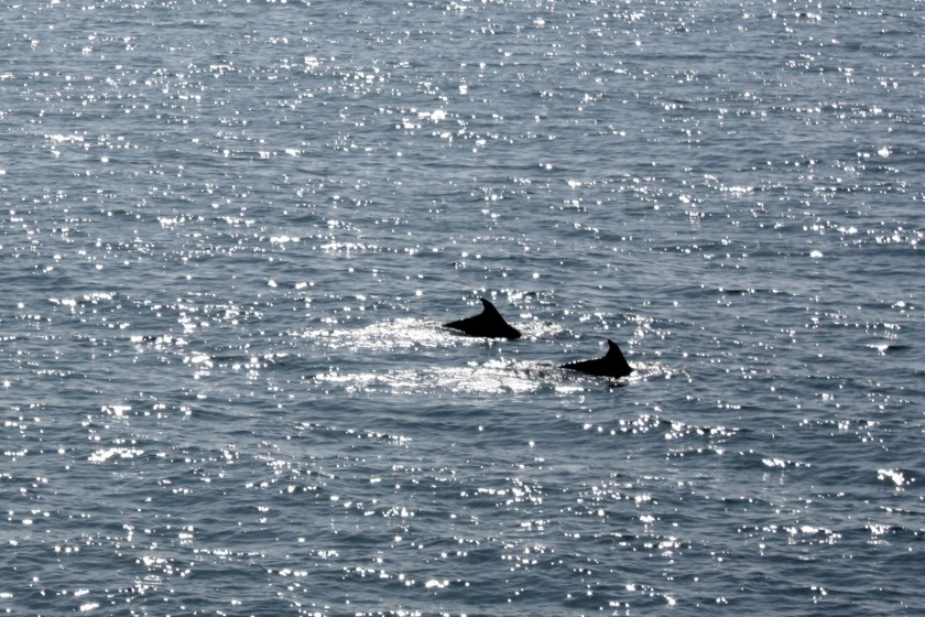 img_2692-dolphins