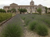 Lavendin field outside the asylum. We were told this was hybrid lavender that grows in the southern part of Provence.