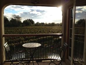 Sunrise at the vineyard...